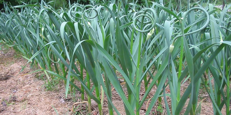 Garlic Workshop - Guelph May 12, 2020