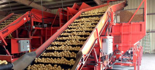 Mayo Evenflow Hopper pour pommes de terre et autres légumes