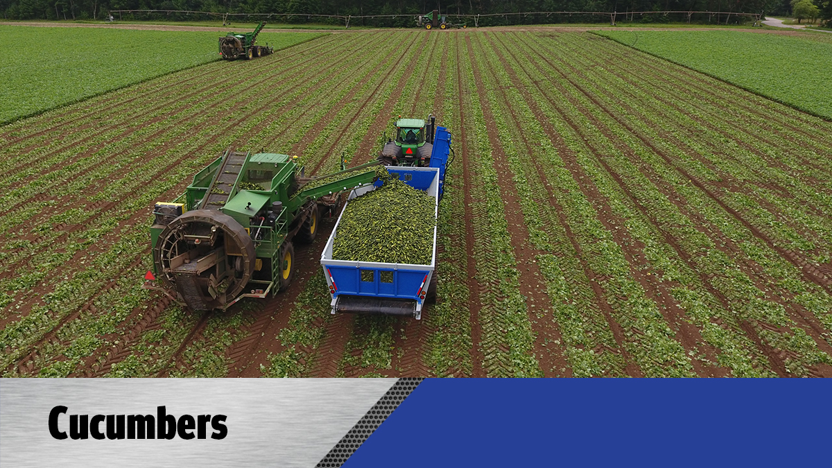 Crop Shuttle Cucumbers - Crop Cart