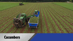 Crop Shuttle Cucumbers - Crop Cart