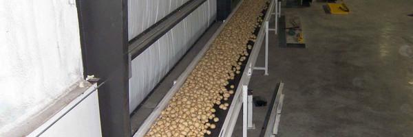 Convoyeurs de pommes de terre et de racines de Mayo