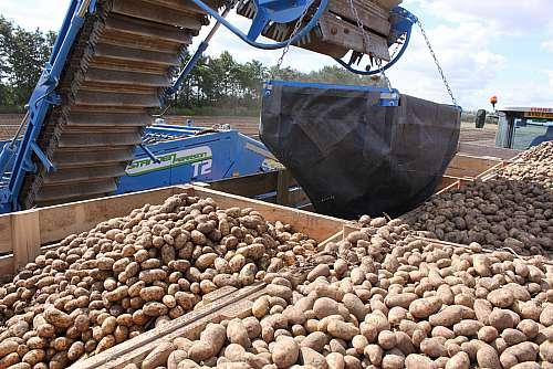 Standen T2 Potato Digger