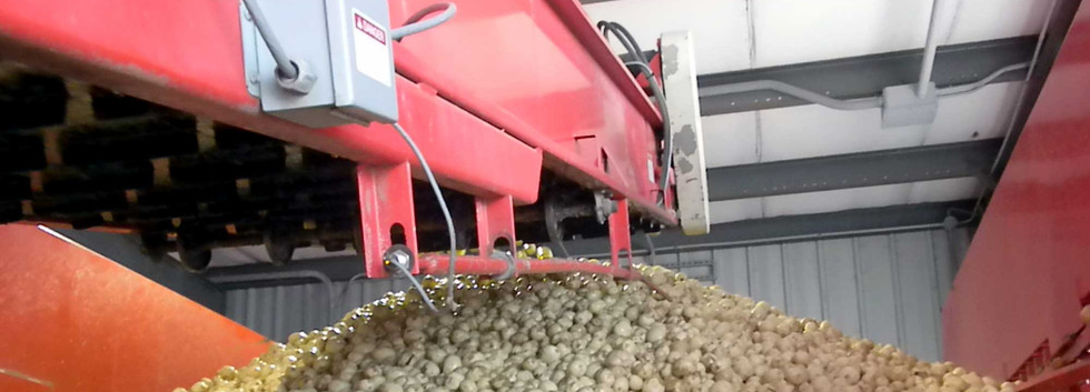 Mayo Evenflow Hopper For Potatoes and Other Vegetables