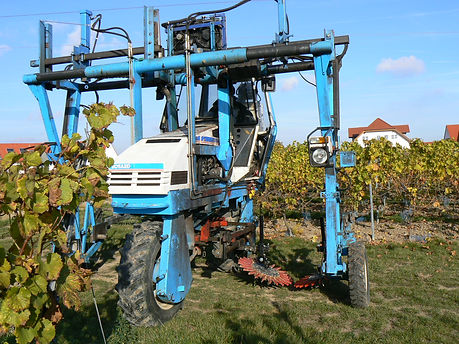 Kult Kress Fingerweeder Vineyard.jpg