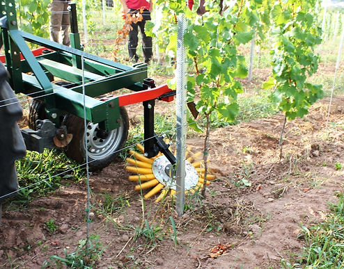 Kult Kress Fingerweeder Vineyard 5.jpg