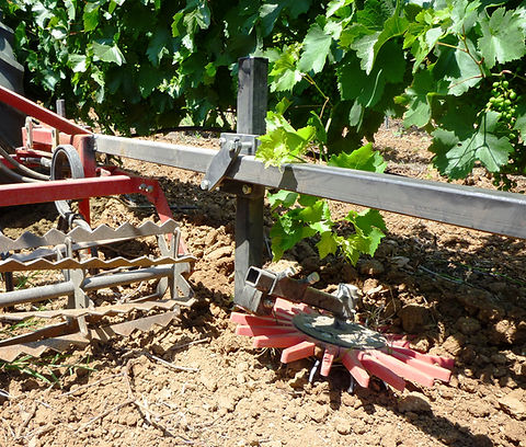 Kult Kress Fingerweeder Vineyard 3.jpg