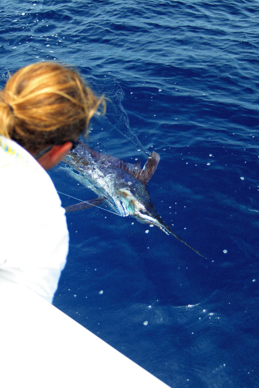 Key Largo White Marlin