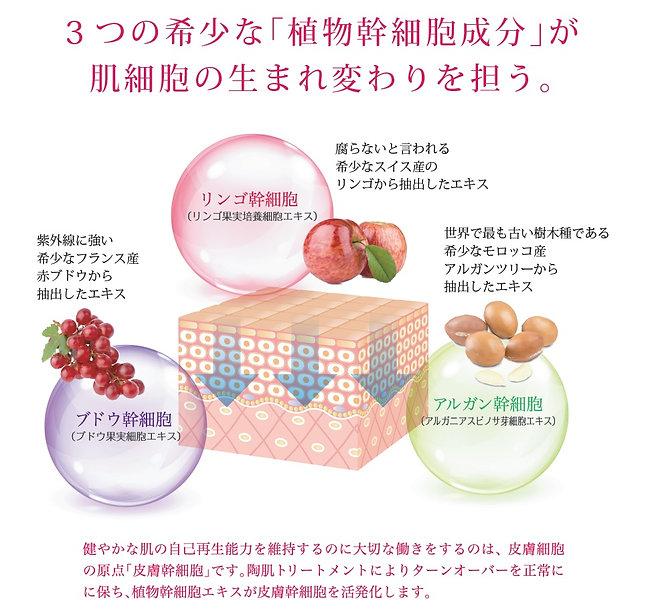 touki03-2.jpg