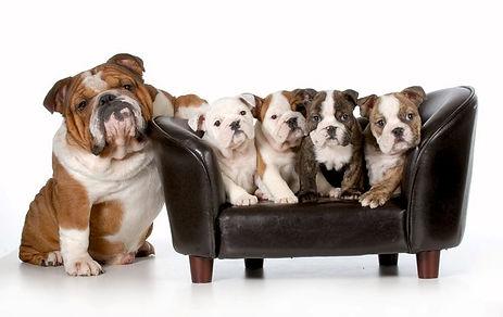dogcouch.jpg