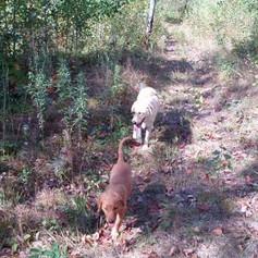 Hiking dogs.jpg