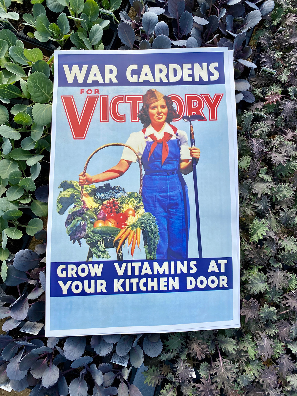 image of war time victory garden ad