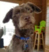 Buddy-Peanut-3-278x300.jpg
