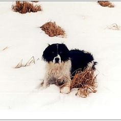Maxine on snow 2 bordered.jpg