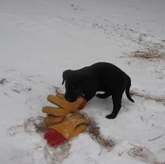 Dan's pup with gloves.jpg