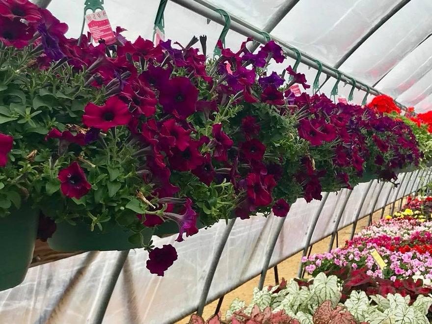 hanging baskets 9.jpg