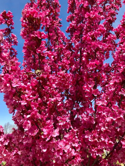 trees 8.jpg