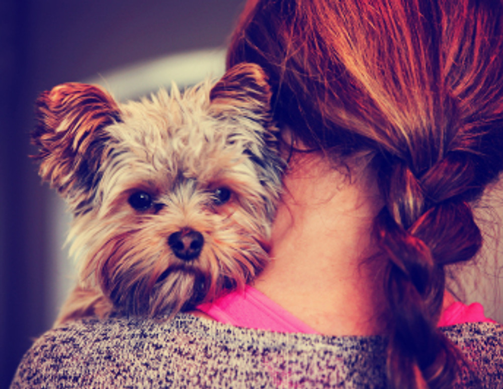 a cute yorkshire terrier peeking from around a woman toned with