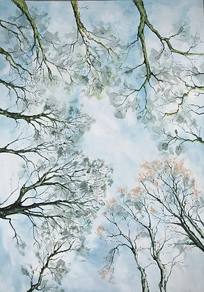Epping Forest looking Up - Print
