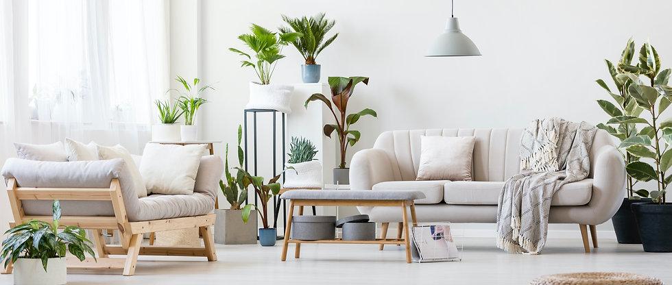 Salon et plantes d'intérieur