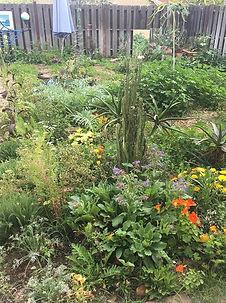 Wild Garden, Backyard Garden, Urban Farming, Los Angeles, Cici Cyr, Abundant LA Gardens, Edible Landscaping, Herbal Medicine, Edible Flowers
