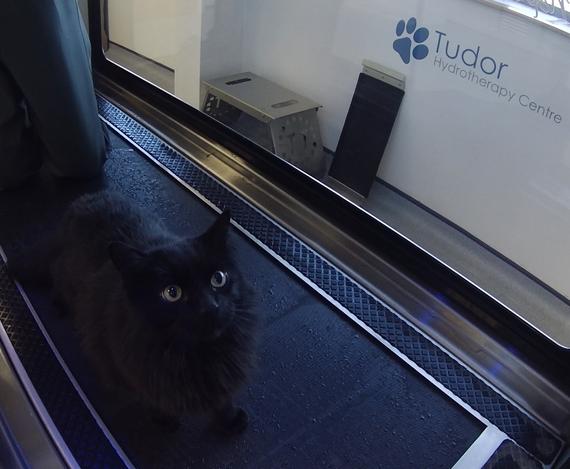 Tudor Canine Hydrotherapy Sheffield