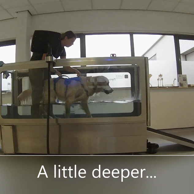 Tudor Canine Hydrotherapy Sheffield