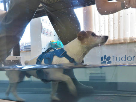 Hydrotherapy: The Owners Point of View!
