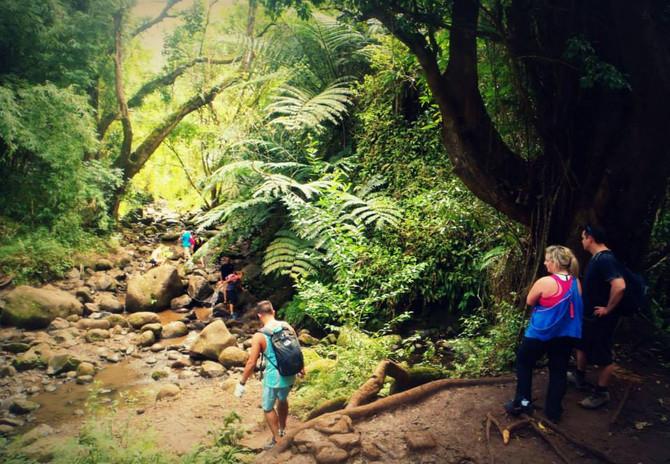 Začínáme objevovat Oahu - bahnitou cestou za vodopády a za odměnu dokonalé vlny na NorthShore.