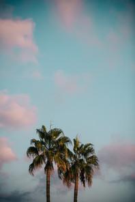 palms over blue pink sky mallorca spain