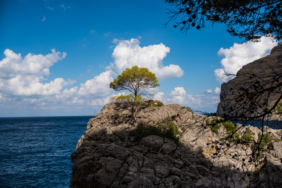 sa colobra, alone tree on the rock and sea in the background