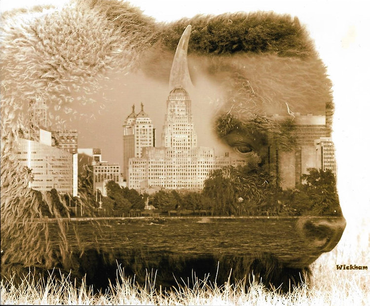 Buffalo Double Exposure.jpg