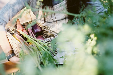 Woman Picking Organic Vegetables