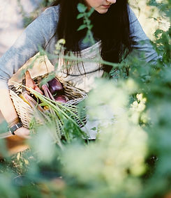 Femme cueillette des légumes biologiques