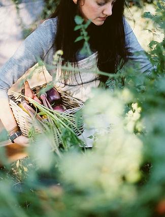 Kvinnen Plukke økologiske grønnsaker