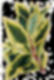 Tropical Leaves 9