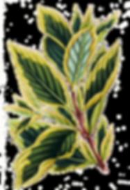熱帯の葉9