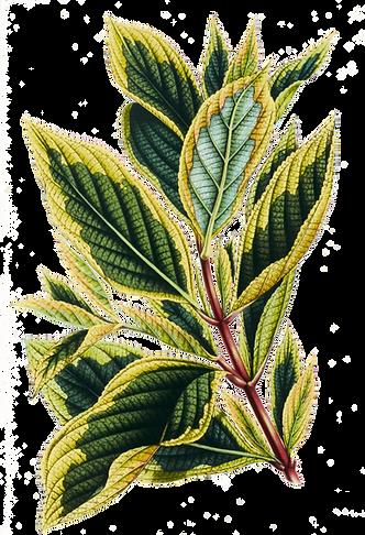 Folhas tropicais 9