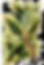 Les feuilles tropicales 9