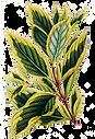 Tropische bladeren 9