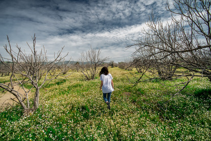In the Orchard