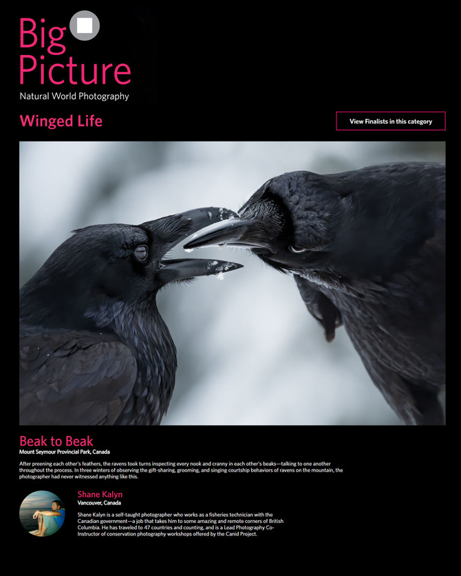 A '4 Element Photo' named the WINNER in the 2021 Big Picture Natural World photography contest!!!!