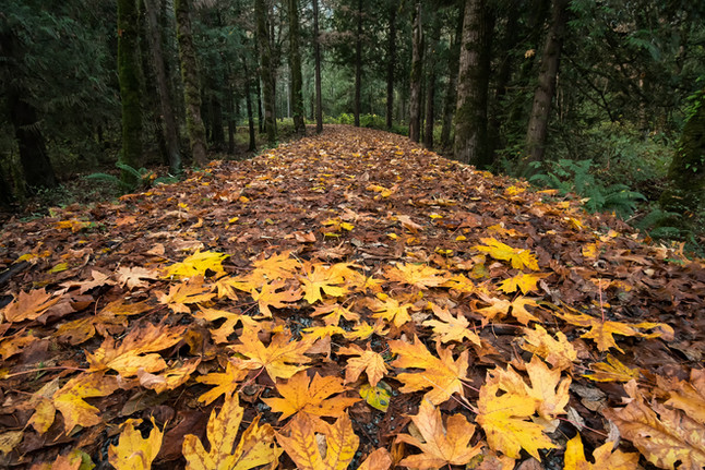 A Canadian Trail