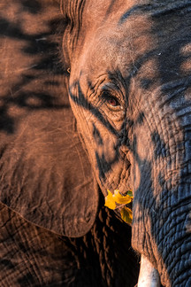 Matriarch in the Shadows