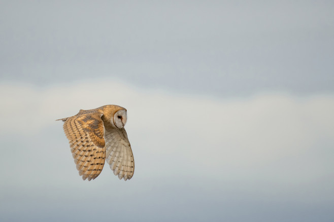 BAOW Flight