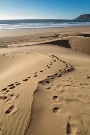 Seaside Sand Dunes
