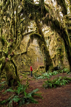 Under Mossy Giants