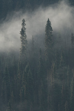 Misty Sentinels