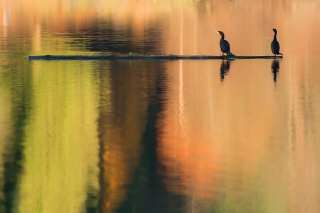 Cormorants & Colours