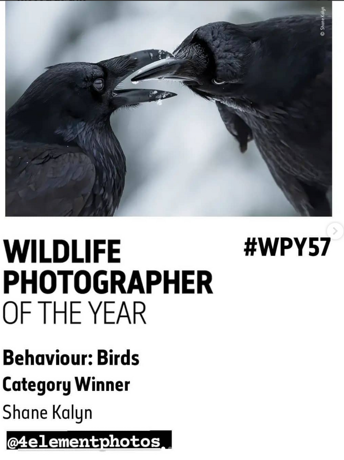 A '4 Element Photo' just named WINNER in the 2021 Wildlife Photographer of the Year contest!!!