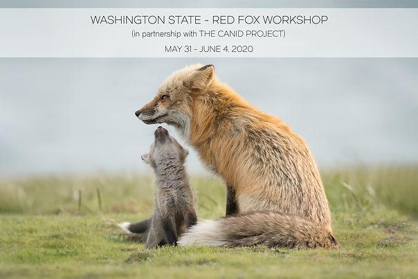 SJI Red FOX Workshop Photo.jpg